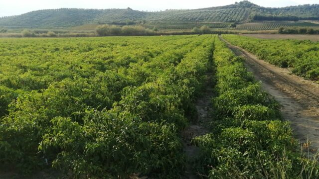 """Confagricoltura Crotone: """"Si al Green Pass ma con buon senso"""""""