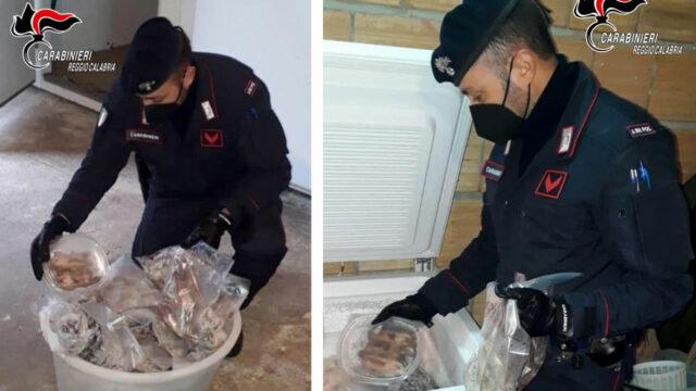 Avevano 235 ghiri congelati in frigo e una piantagione di marijuana, tre arresti